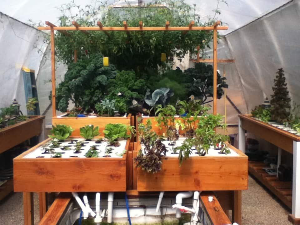 Backyard Aquaponics System