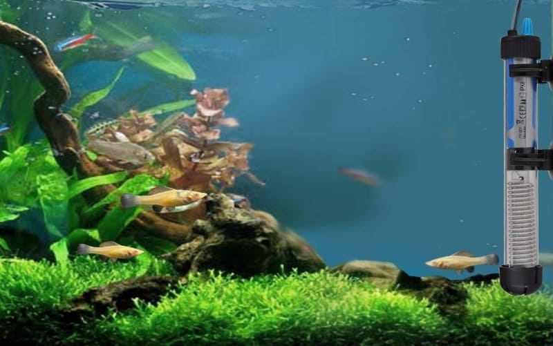 Top 5 Aquaponics Fish Tank Water Heaters