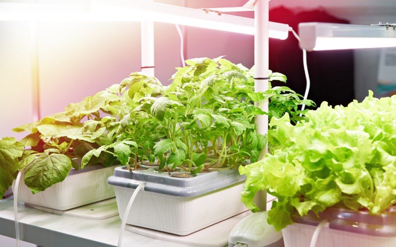 10 Most Useful Products for Aquaponics Maintenance