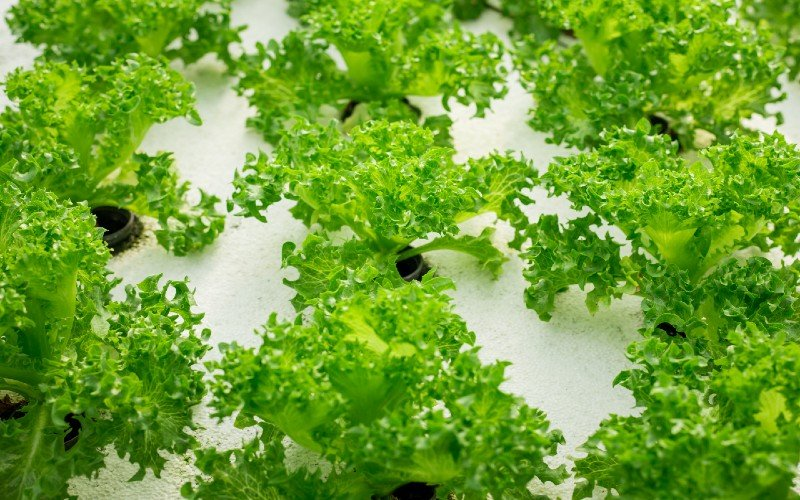 Pros and Cons of Different Types of Aquaponics Systems