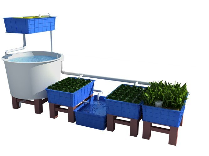 What Is The Right Fish To Plant Ratio In Aquaponics?