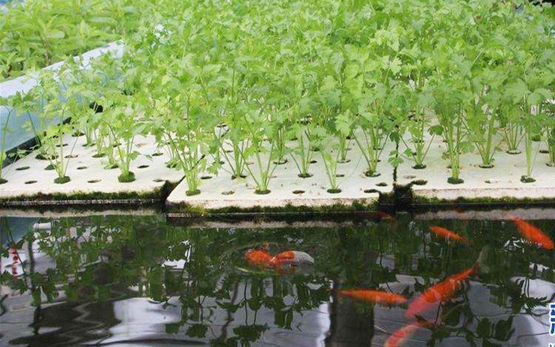The Most Common Mistakes People Make in Aquaponics