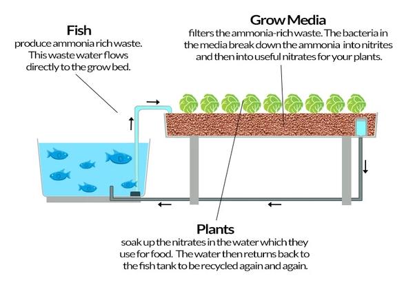 Flood and Drain Aquaponics System