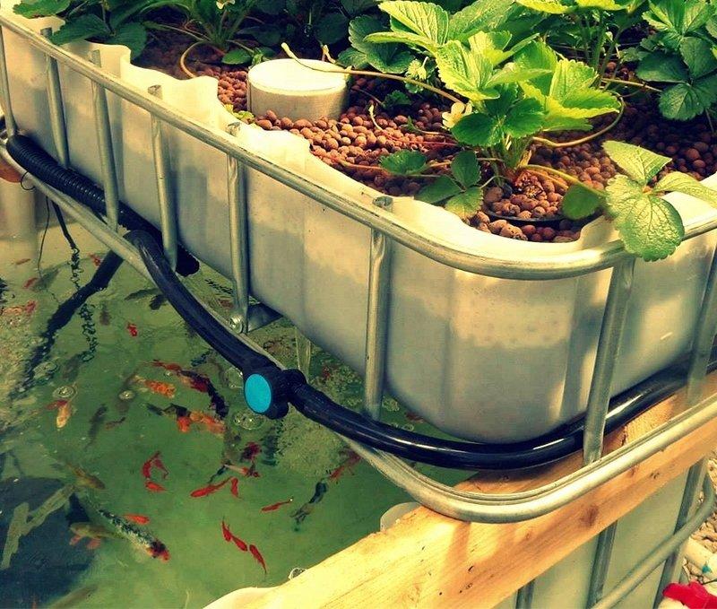 Media Based Aquaponics System