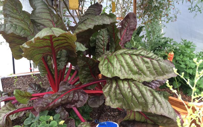 Tips for Aquaponics Gardening