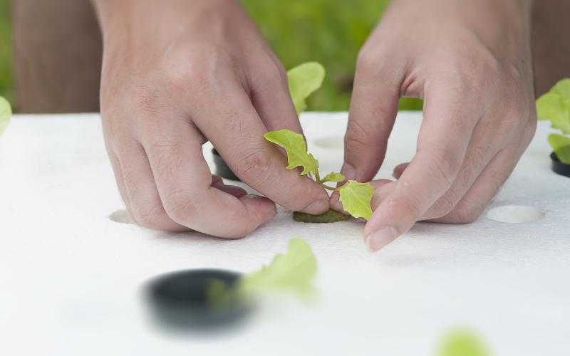 Planting Guide in Aquaponics